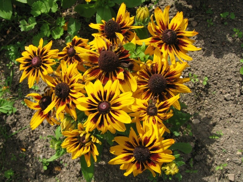 Fleurs du jardin Img_0016