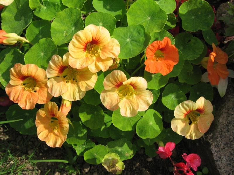 Fleurs du jardin Img_0017