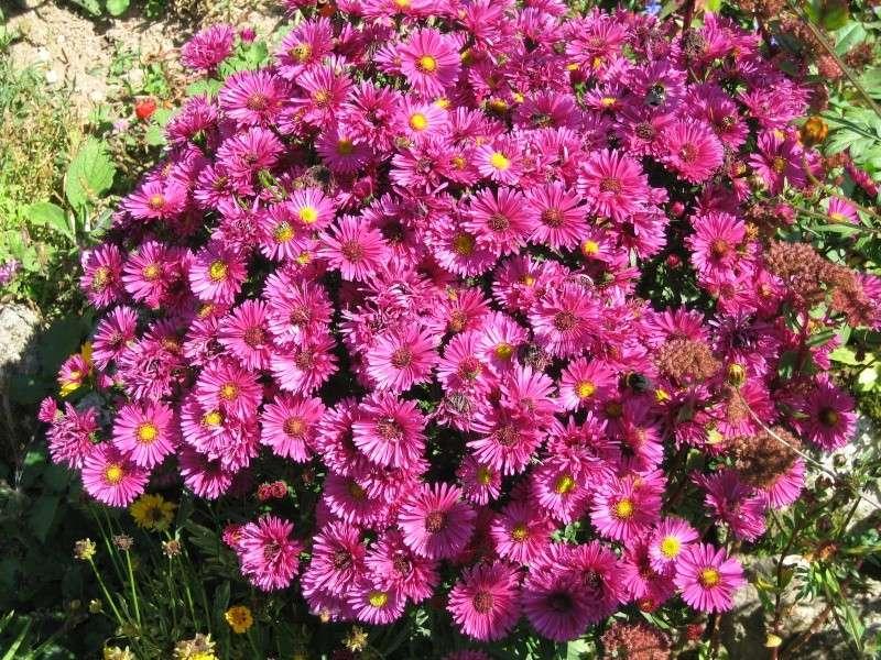 Fleurs du jardin Img_0018