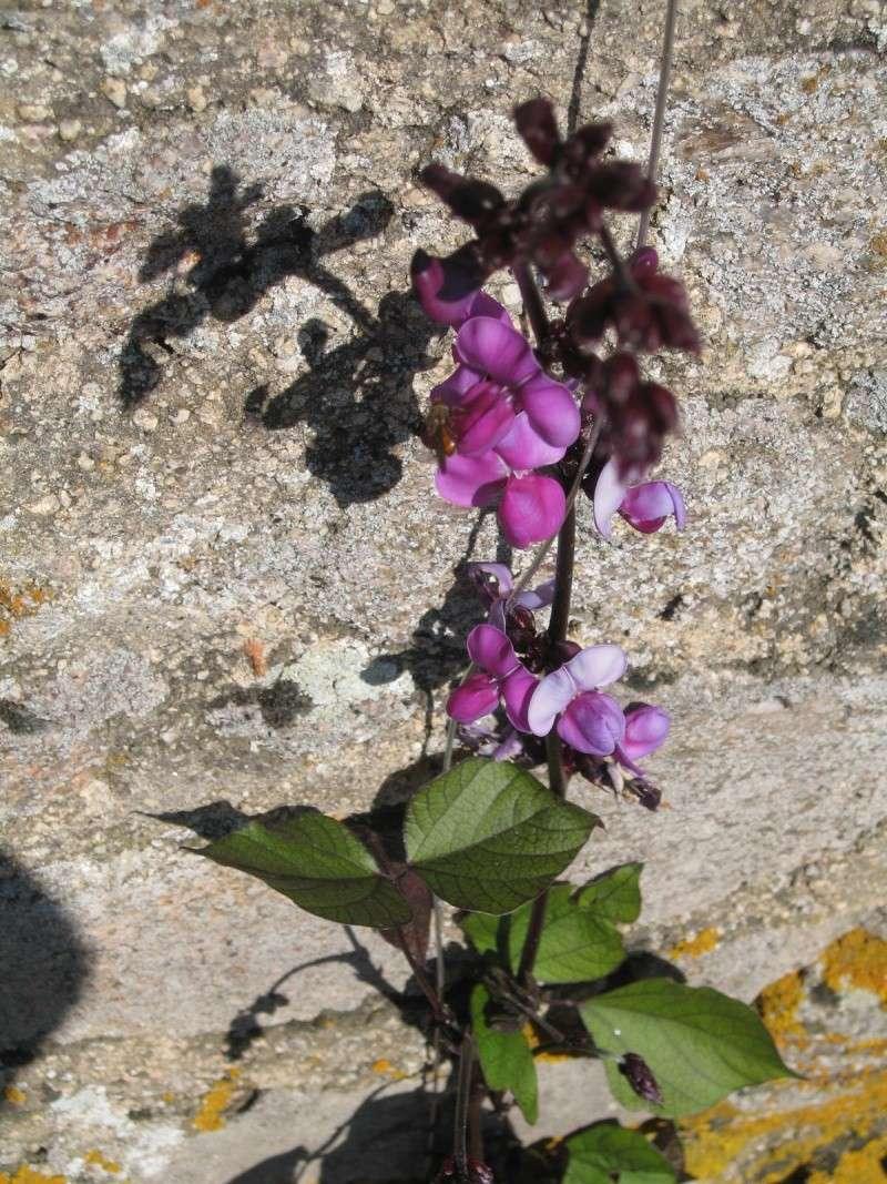 Fleurs du jardin Img_0020