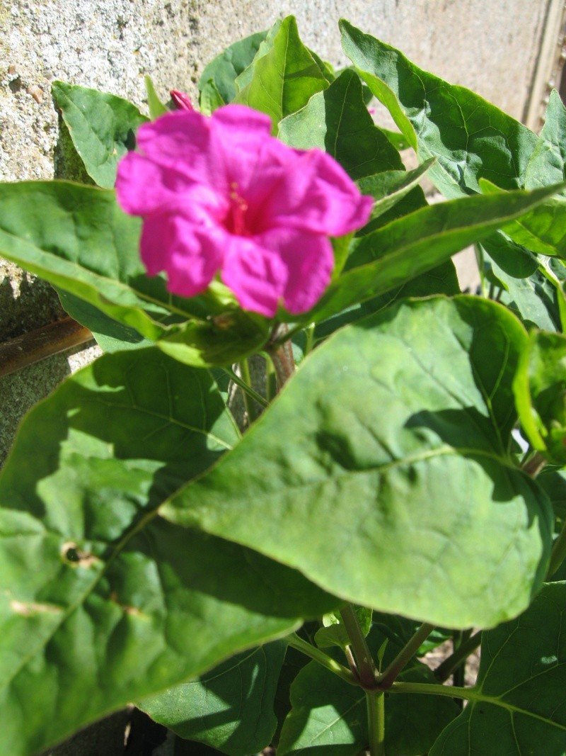 Fleurs du jardin Img_0021
