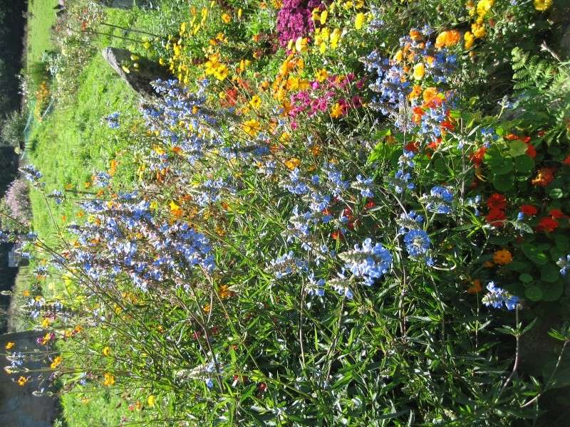 Fleurs du jardin Img_0028