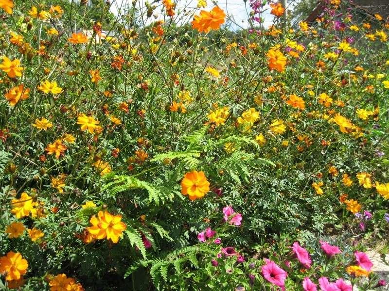 Fleurs du jardin Img_0029