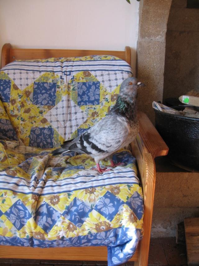 Les périples d'une pigeonne Img_0043