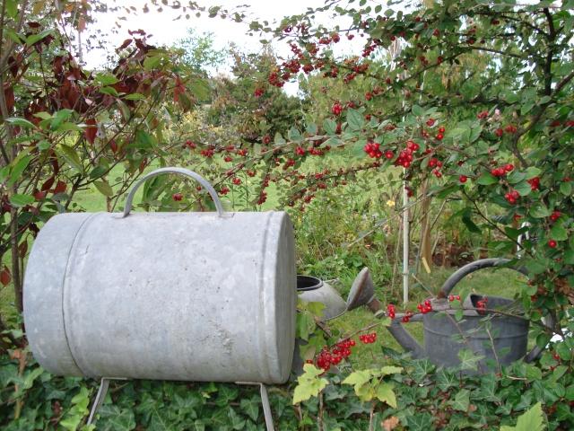 le jardin de Giroflee - Page 5 Jar_1019