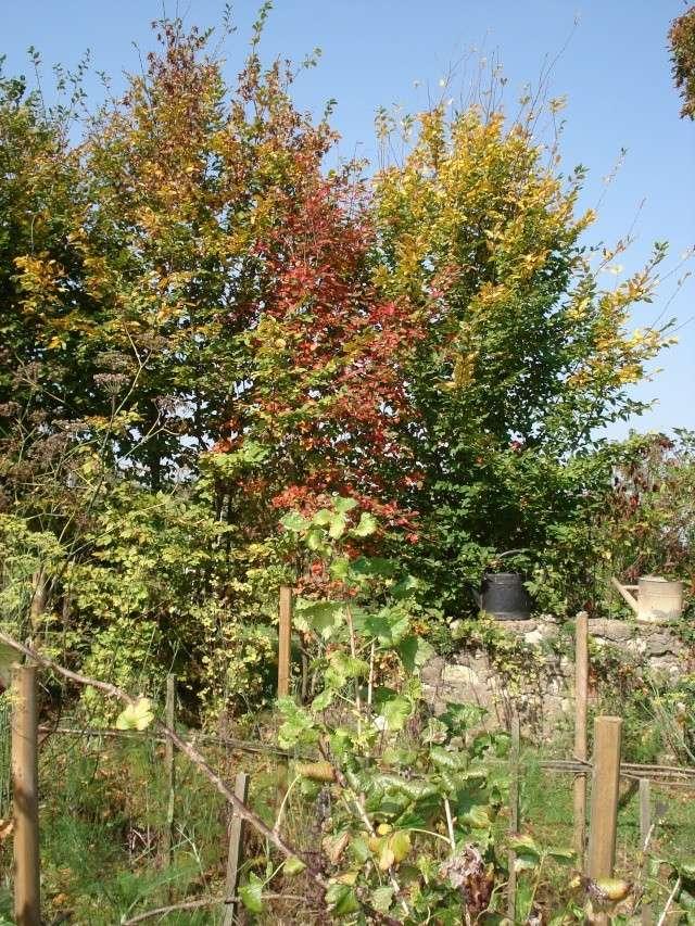 le jardin de Giroflee - Page 6 Jard_o20