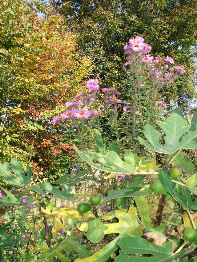 le jardin de Giroflee - Page 6 Jard_o23