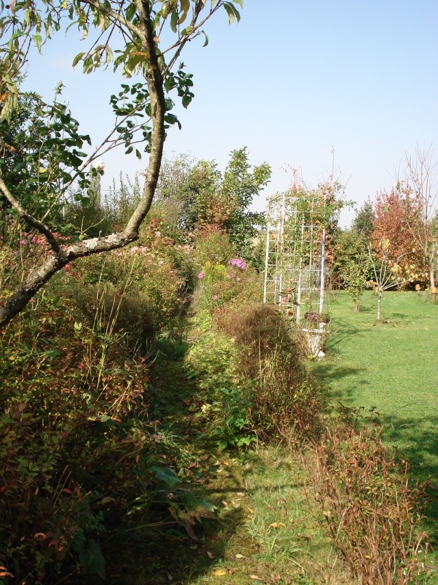 le jardin de Giroflee - Page 6 Jard_o24