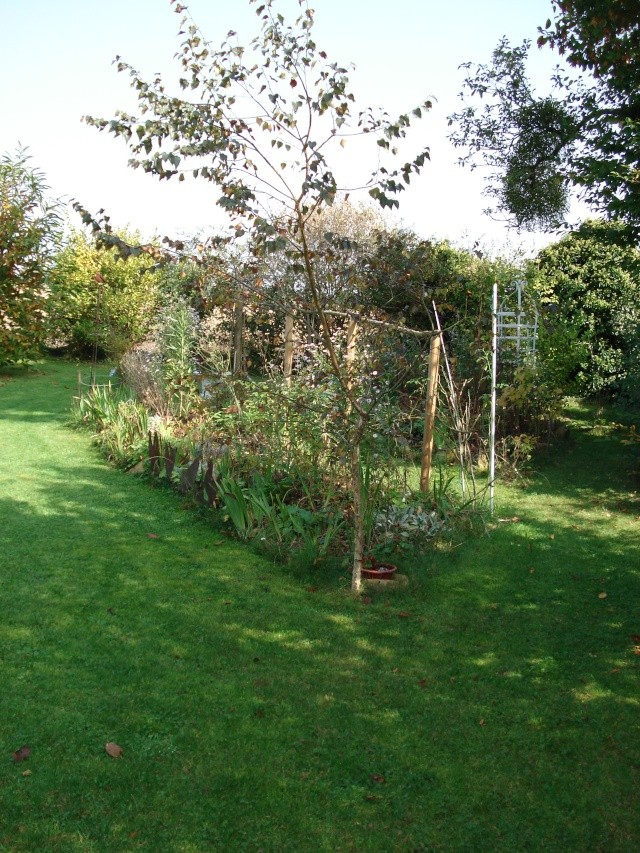 le jardin de Giroflee - Page 6 Jard_o25