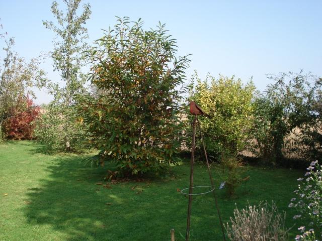 le jardin de Giroflee - Page 6 Jard_o26