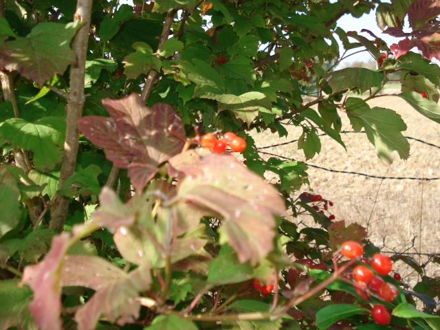 le jardin de Giroflee - Page 6 Jard_o28