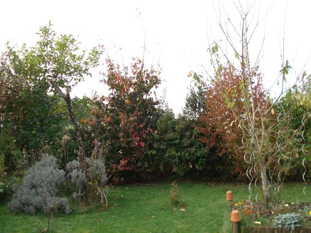 le jardin de Giroflee - Page 6 Jardin24