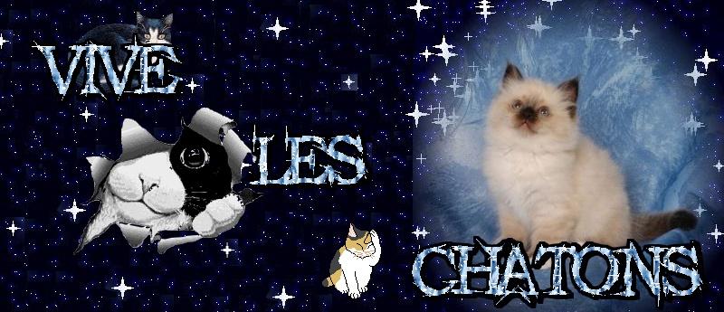 Vive les chatons Banier10