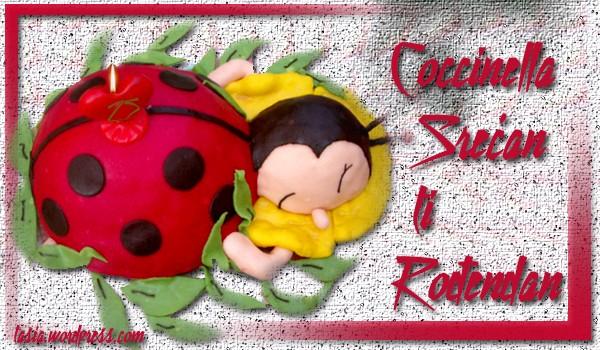 Coccinella Coccin10