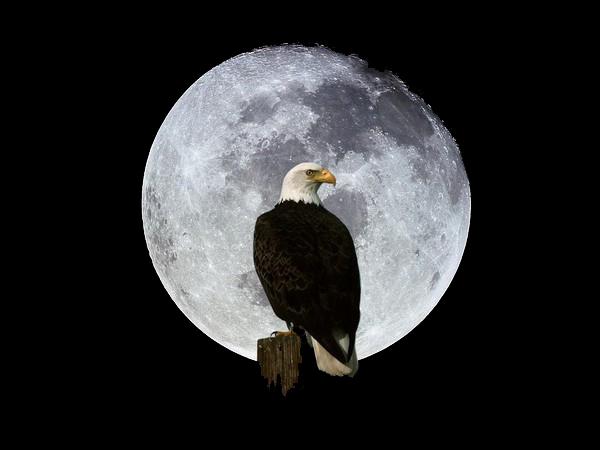 Thème astral 2011 pour le Cercle de Samsara Lune_a10