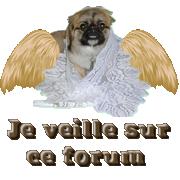 créer un forum : La Rose de L'Amitié - portail  Ange_d10
