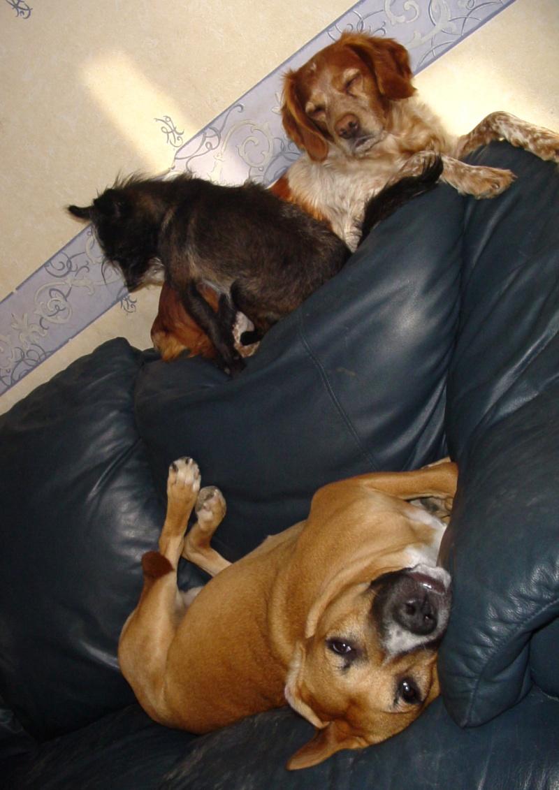 Mogwai, Laika et leurs copines poilues!!!!... Dsc01211