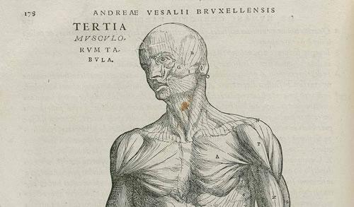 10 cosas que hubieras preferido no saber sobre tu cuerpo Anatom10
