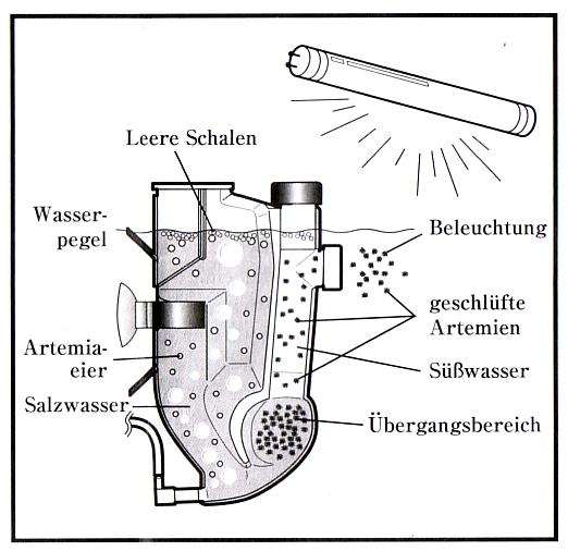 Ecloisoir/distributeur artemias .. Plan10