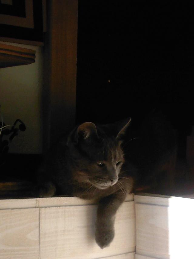 Luna, dit La petite Lulu. Sp_a3010