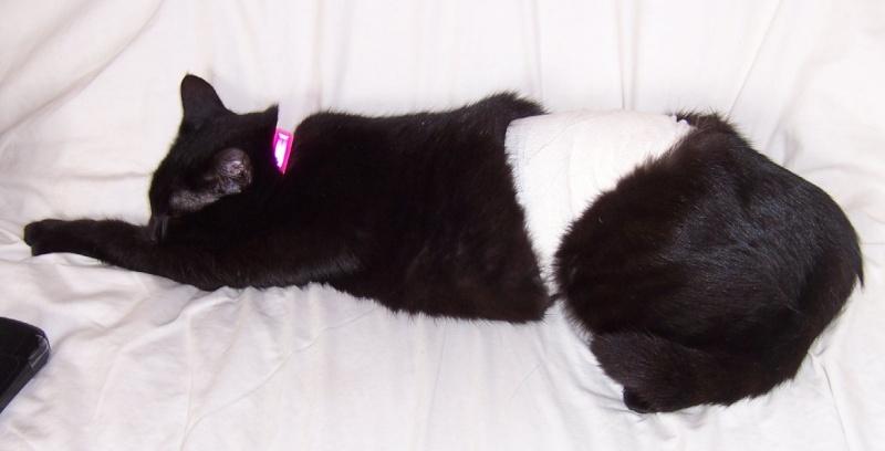 Lily, notre panthère noire.... (anciennement Lydie 2007) - Page 2 Pansem10