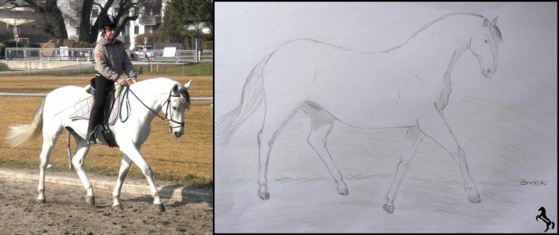 Propose de dessiner gratuitement vos chevaux !  29853210