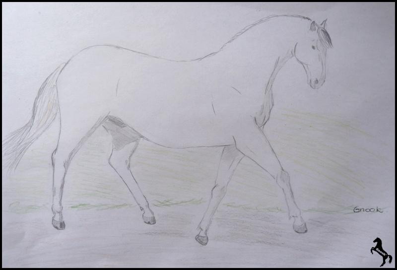 Propose de dessiner gratuitement vos chevaux !  - Page 5 P1070210