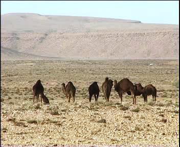 السياحة الجزائرية A110