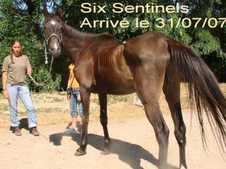 Six Sentinels 6senti11