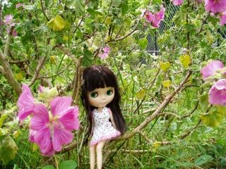 Night Flower (NF) // SBL Tbs_1410