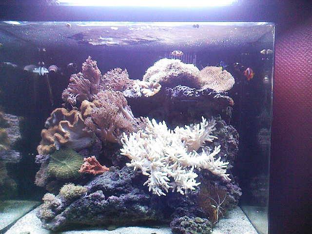 mes bacs eau de mer Sp_a0012