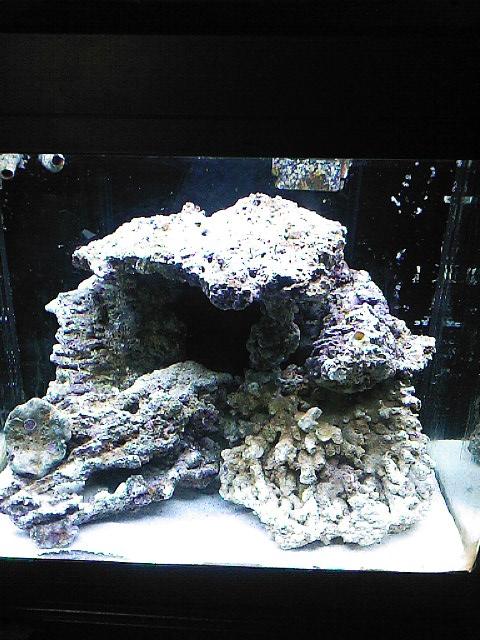 mes bacs eau de mer Sp_a0013
