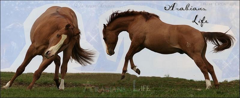 Arabians Life