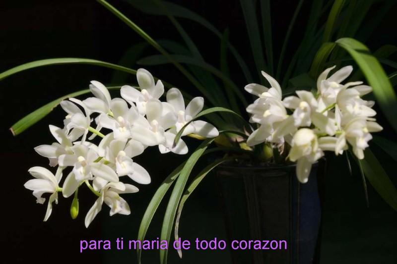 DEDICATORIA.- SONRÍE A LA VIDA SHEREZADE (MARÍA) Maria_10