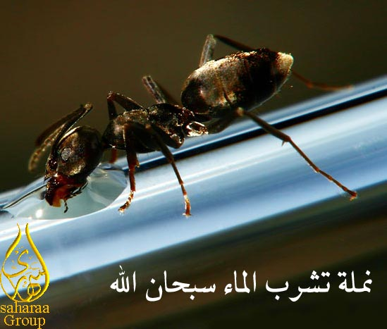 صور منوعة Namlah10