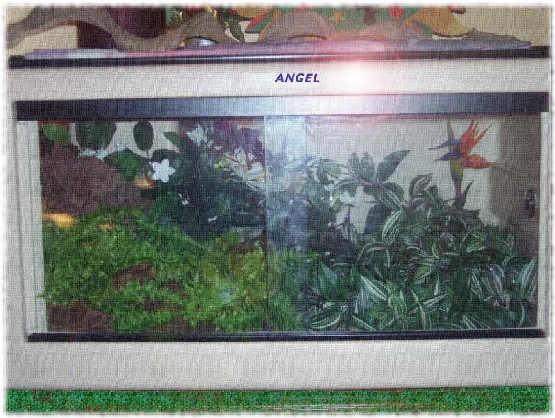 Nouveau terrarium de mon boa Angel10