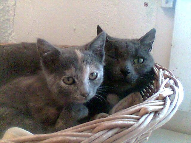 mes photos du CLC Cat0110