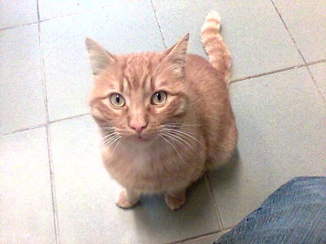 mes photos du CLC Cat0610