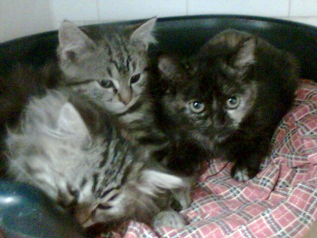mes photos du CLC Cat0810