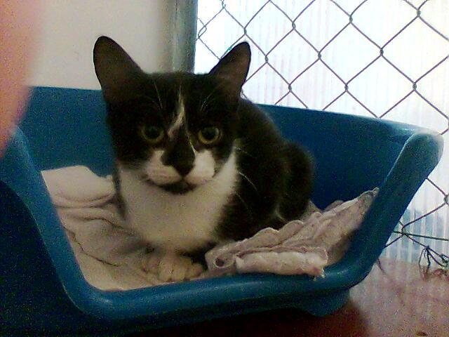 mes photos du CLC Cat1010