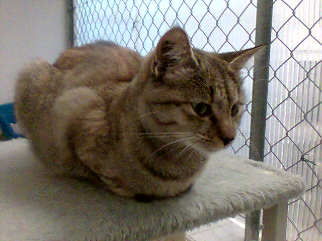 mes photos du CLC Cat1110