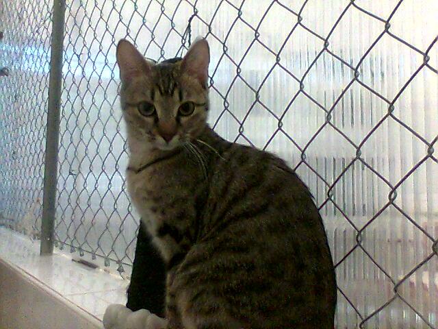 mes photos du CLC Cat1710