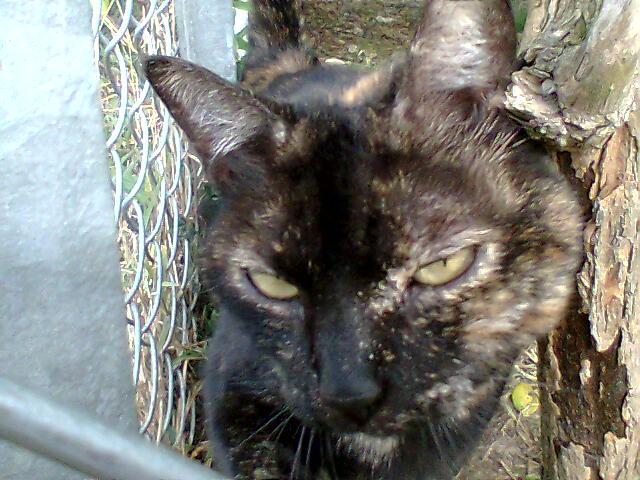 mes photos du CLC Cat2110