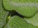 Plantes d'eau Dscn6115