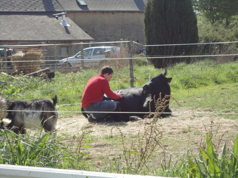 Fadjen, taureau sauvé de la corrida Dsc04511
