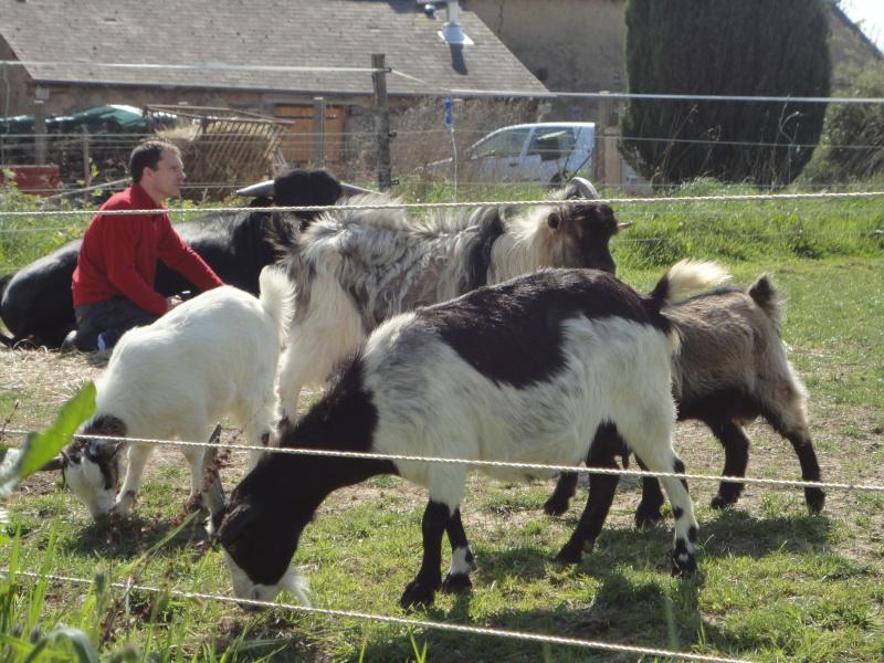 Fadjen, taureau sauvé de la corrida Dsc04512