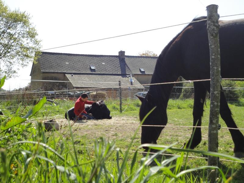 Fadjen, taureau sauvé de la corrida Dsc04513