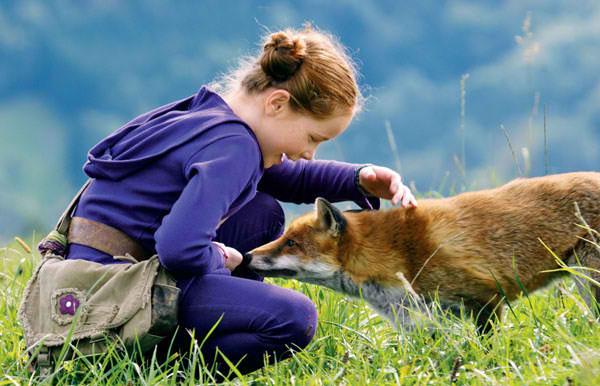 Μικρός γλάρος  Fox20a12