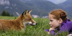 Μικρός γλάρος  Fox20a13
