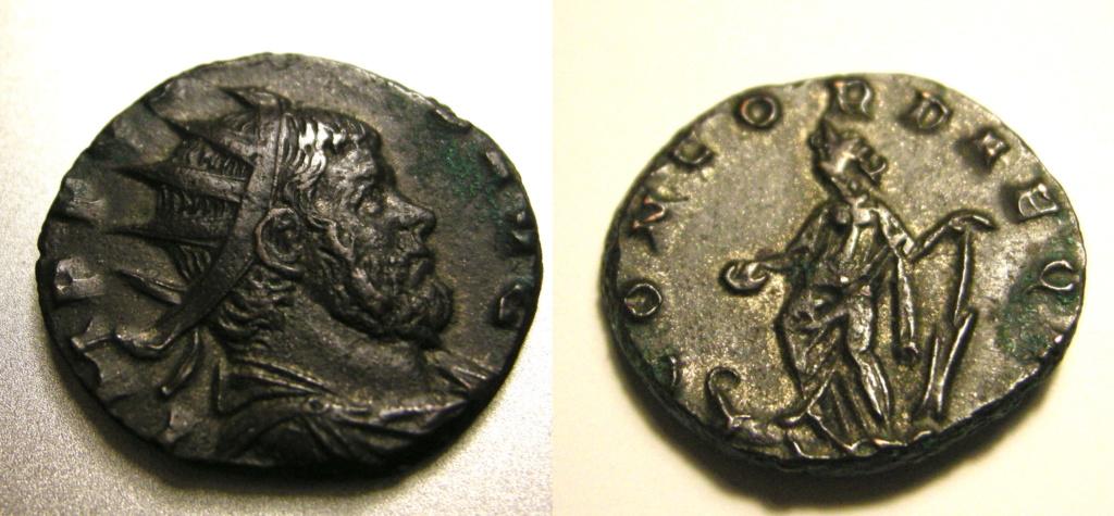 Aureolus Dscn3141